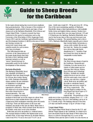 Guide to sheep breeds for the Caribbean