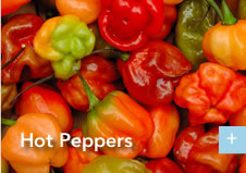 pic_hotpeppers