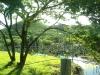 field-trip-mangrove-site-1-w640