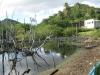 fieldtrip-mangrovesite1